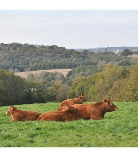 Colis découverte de viande de boeuf bio de France