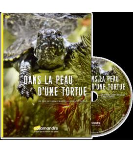 Dans la peau d'une tortue