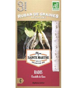 Radis Chandelle de Glace - Semences reproductibles bio